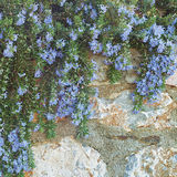 垂悬的春天庭院 免版税库存图片