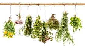 垂悬的束新鲜的辣草本 作为消沉有效草本金丝桃属植物医学perforatum对待 免版税库存照片