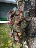 垂悬的植物好室内植物在我的庭院里 免版税库存图片