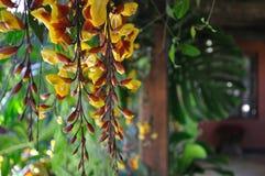 垂悬的热带花 免版税库存图片