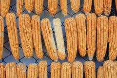 垂悬的玉米和棒子连续 免版税库存图片