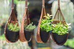 垂悬的篮子充满花在庭院里 免版税库存照片