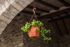 垂悬的篮子植物 图库摄影