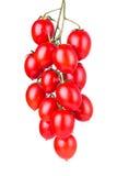 垂悬的西红柿 图库摄影
