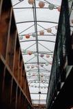 垂悬的轻的lantrens 2 库存图片