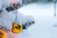 垂悬从一个积雪的圣诞树分支的明亮的金装饰品 库存照片