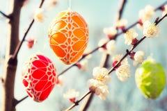 垂悬从一棵开花的苹果树的复活节彩蛋 库存照片