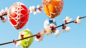 垂悬从一棵开花的苹果树的复活节彩蛋 免版税库存照片