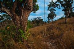 垂悬从在小山的树的绳索 免版税图库摄影