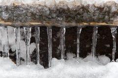 垂悬从木的冰柱 免版税库存照片