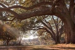 垂悬从树枝的摇摆 免版税库存图片