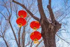 垂悬从树的四个灯笼在冬天 免版税库存图片
