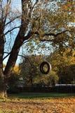 垂悬从树的轮胎摇摆 免版税库存照片