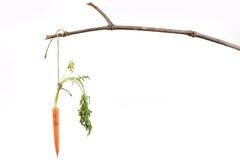 垂悬从棍子的红萝卜 免版税库存图片