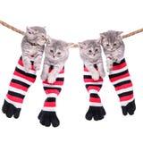 垂悬洗涤的线的小猫 免版税库存照片