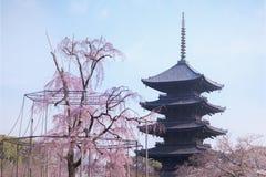 垂柳树和樱桃树在Toji绽放京都tem 免版税图库摄影