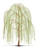 垂柳树 向量例证