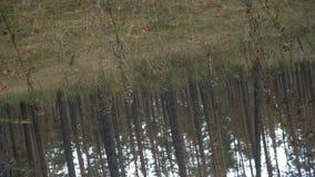 垂直在森林里转动照相机360度 股票录像