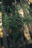 垂直的庭院的美好的本质有绿色纹理的backg的 库存照片