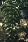 垂直的庭院的美好的本质有绿色纹理的backg的 库存图片