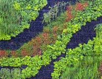 垂直的庭院,绿色墙壁在弗罗茨瓦夫,波兰 库存图片