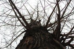 垂直的树 免版税库存图片