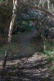 垂直,湖罗伯特供徒步旅行的小道 免版税图库摄影