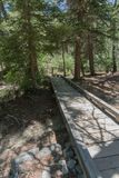垂直, Fawn湖木路在新墨西哥 免版税库存图片