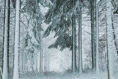 垂直的光秃的树干在冬天 免版税库存图片