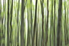 垂直的平底锅树 提取森林 免版税库存照片