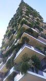 垂直的森林 免版税库存照片