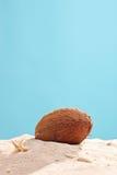 垂直的演播室射击了在沙子的一个椰子 免版税图库摄影