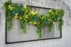 垂直的热带庭院 图库摄影