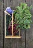 垂直的甜菜和手套在煤斗 免版税库存照片