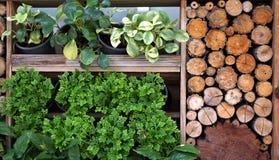 垂直的绿色和木庭院风景和设计 免版税图库摄影