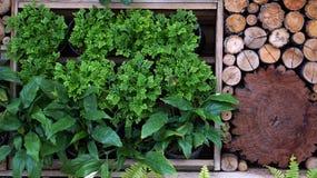 垂直的绿色和木庭院风景设计 库存图片