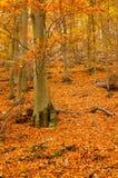 垂直秋天叶茂盛的森林 免版税库存照片