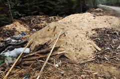 垃圾和锯木屑在森林里 免版税库存照片