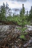 垃圾在森林里 库存图片