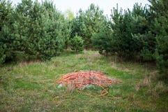 垃圾在森林里 免版税库存图片