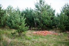 垃圾在森林里 免版税库存照片