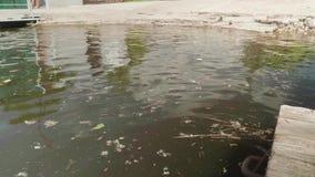 垃圾在河中泥泞的水在小游艇船坞 影视素材