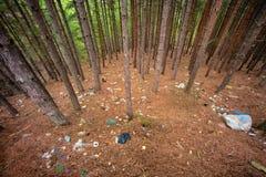 垃圾堆在杉树森林里 免版税库存照片