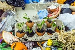 垃圾填埋的发芽的植物 免版税库存照片