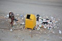 垃圾容器和垃圾 免版税库存照片