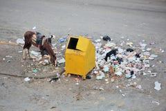 垃圾容器和垃圾 库存图片