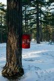 垃圾桶在森林 库存照片