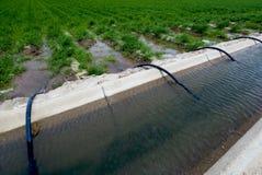 垄沟域灌溉 免版税库存图片