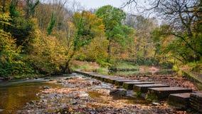 垫脚石在Humford森林的河布莱斯 免版税库存图片