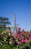 埃佛尔铁塔和花 库存照片